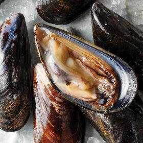 3 (2 lbs. pkgs.) Live Prince Edward Island Mussels