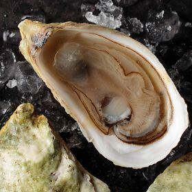 1 pkg. Fresh Malpeque Oysters