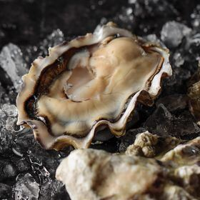 1 pkg. Fresh Malaspina Oysters